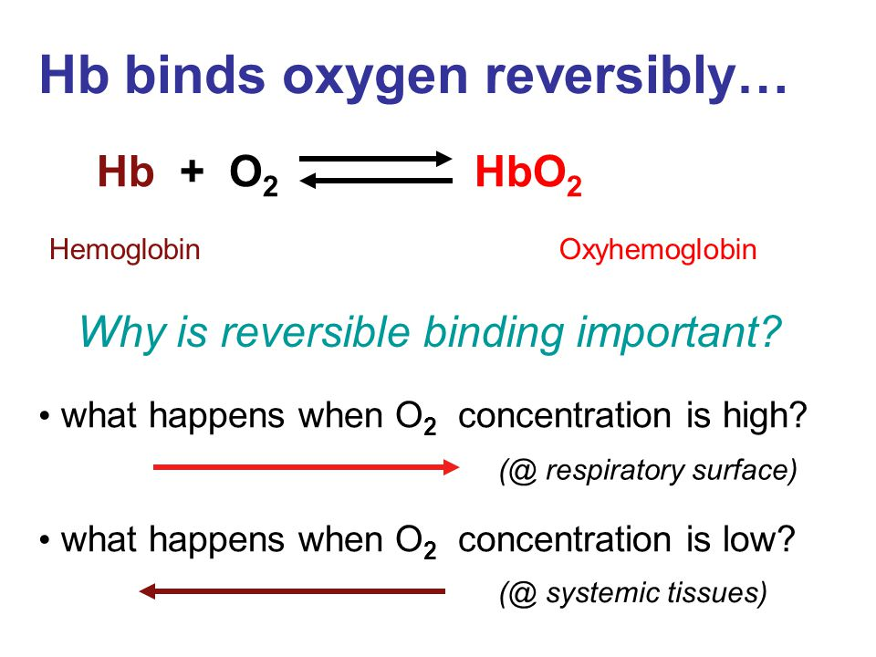 Hb binds oxygen reversibly… Hb + O 2 HbO 2 Hemoglobin Oxyhemoglobin what happens when O 2 concentration is high? what happens when O 2 concentration i