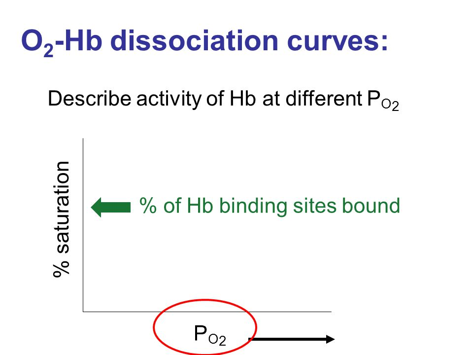 O 2 -Hb dissociation curves: Describe activity of Hb at different P O 2 % of Hb binding sites bound % saturation PO2PO2