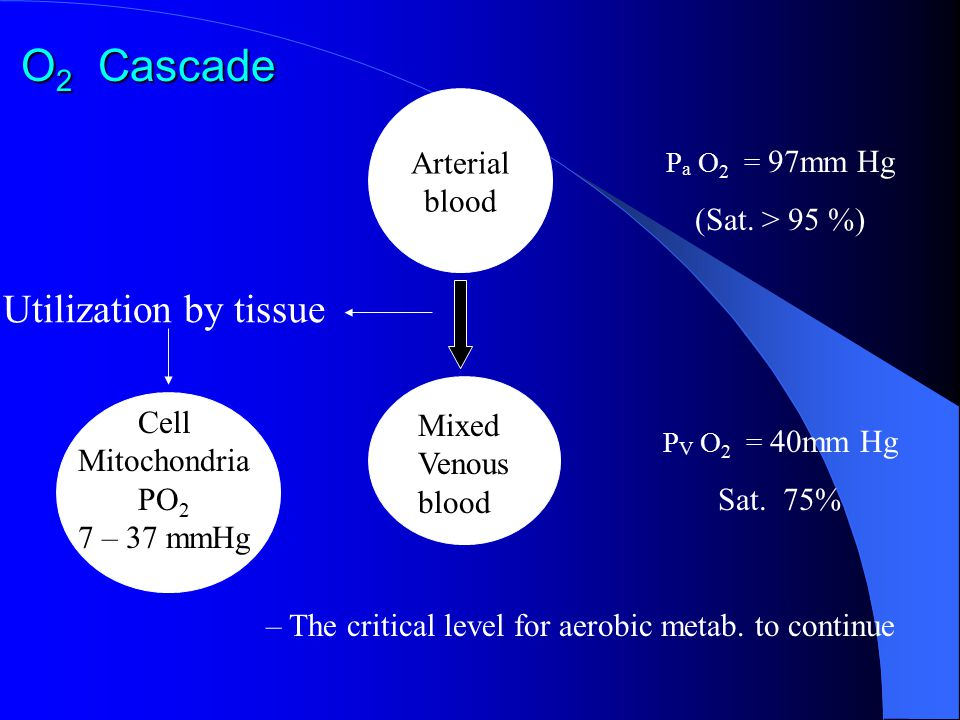 O 2 Cascade Utilization by tissue Arterial blood P a O 2 = 97mm Hg (Sat. > 95 %) Mixed Venous blood P V O 2 = 40mm Hg Sat. 75% Cell Mitochondria PO 2
