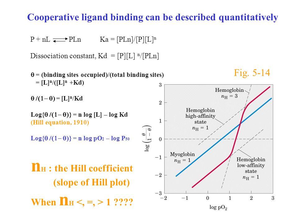 Cooperative ligand binding can be described quantitatively Dissociation constant, Kd = [P][L] n /[PLn] P + nL PLn Ka = [PLn]/[P][L] n  = (binding sites occupied)/(total binding sites) = [L] n /([L] n +Kd)  = [L] n /Kd Log{  = n log [L] – log Kd (Hill equation, 1910) Log{  = n log pO 2 – log P 50 n H : the Hill coefficient (slope of Hill plot) When n H 1 ???.