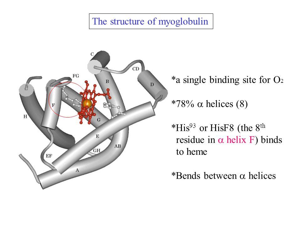 Protein interactions modulated by chemical energy Actin, myosin, and molecular motors Myosin S1