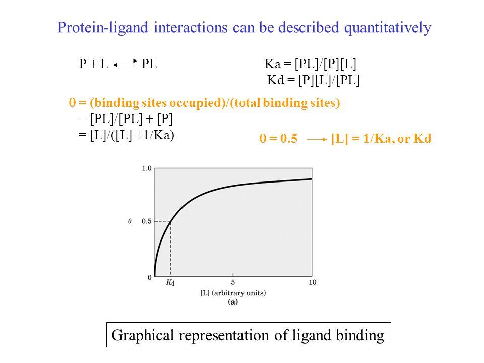 Dissociation constant, K d = [P][L]/[PL] P + L PL Ka = [PL]/[P][L]  = (binding sites occupied)/(total binding sites) = [PL]/[PL] + [P] = [L]/([L] +1/Ka) = [L]/([L] +Kd) When [L] = Kd  = 0.5 (half saturation) [L] = 9 Kd  = 0.9 Kd: the molar concentration of ligand at which half of the available ligand-binding sites are occupied Kd, affinity ( .
