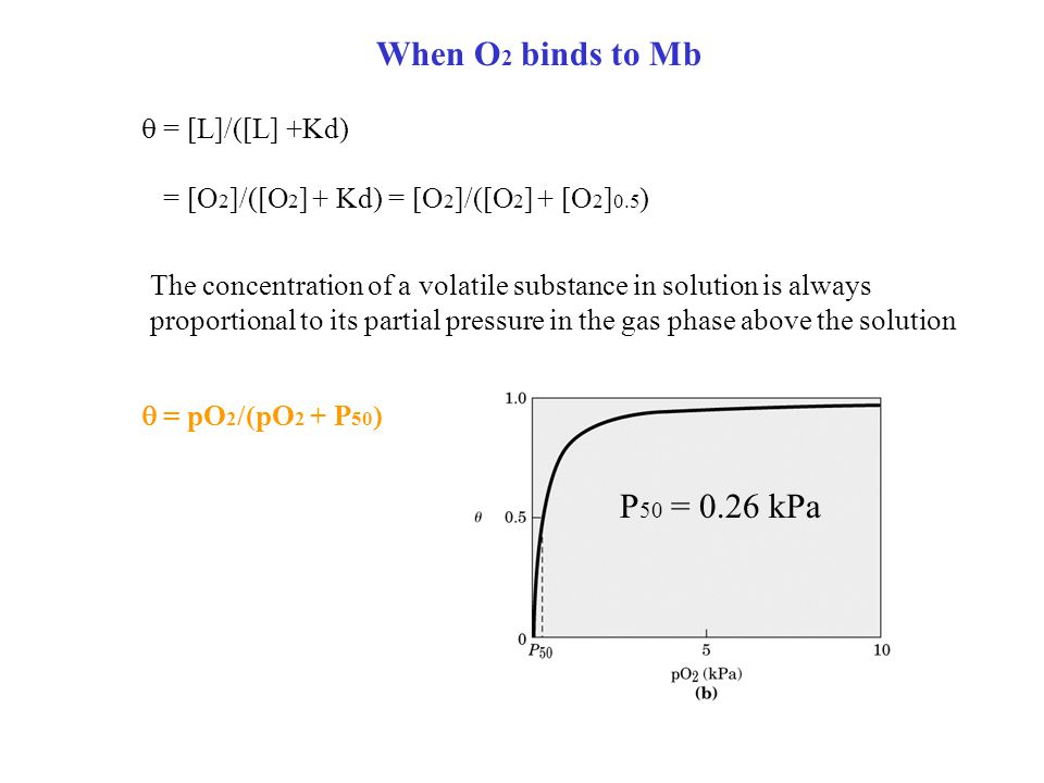 When O 2 binds to Mb P 50 = 0.26 kPa  = [L]/([L] +Kd) = [O 2 ]/([O 2 ] + Kd) = [O 2 ]/([O 2 ] + [O 2 ] 0.5 ) The concentration of a volatile substance in solution is always proportional to its partial pressure in the gas phase above the solution  = pO 2 /(pO 2 + P 50 )