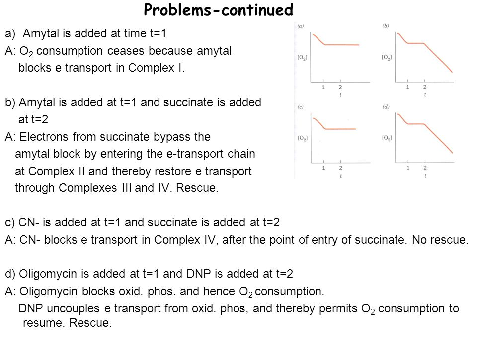 Problems-continued a)Amytal is added at time t=1 A: O 2 consumption ceases because amytal blocks e transport in Complex I. b) Amytal is added at t=1 a