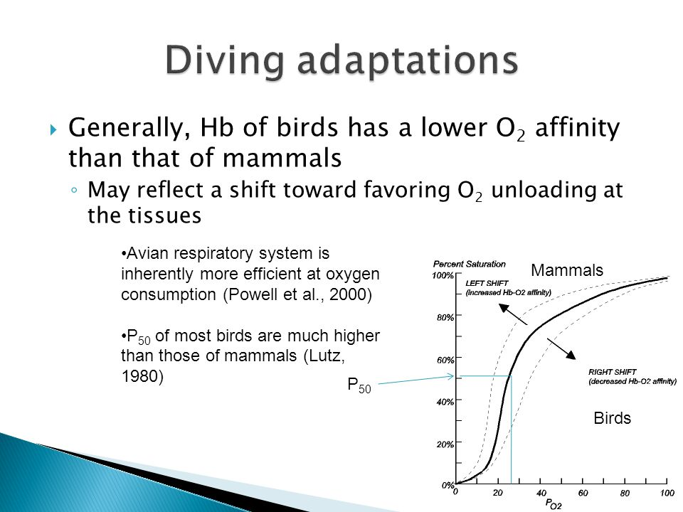  Generally, Hb of birds has a lower O 2 affinity than that of mammals ◦ May reflect a shift toward favoring O 2 unloading at the tissues P 50 Avian respiratory system is inherently more efficient at oxygen consumption (Powell et al., 2000) P 50 of most birds are much higher than those of mammals (Lutz, 1980) Mammals Birds