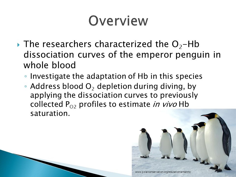  The researchers characterized the O 2 -Hb dissociation curves of the emperor penguin in whole blood ◦ Investigate the adaptation of Hb in this species ◦ Address blood O 2 depletion during diving, by applying the dissociation curves to previously collected P O2 profiles to estimate in vivo Hb saturation.