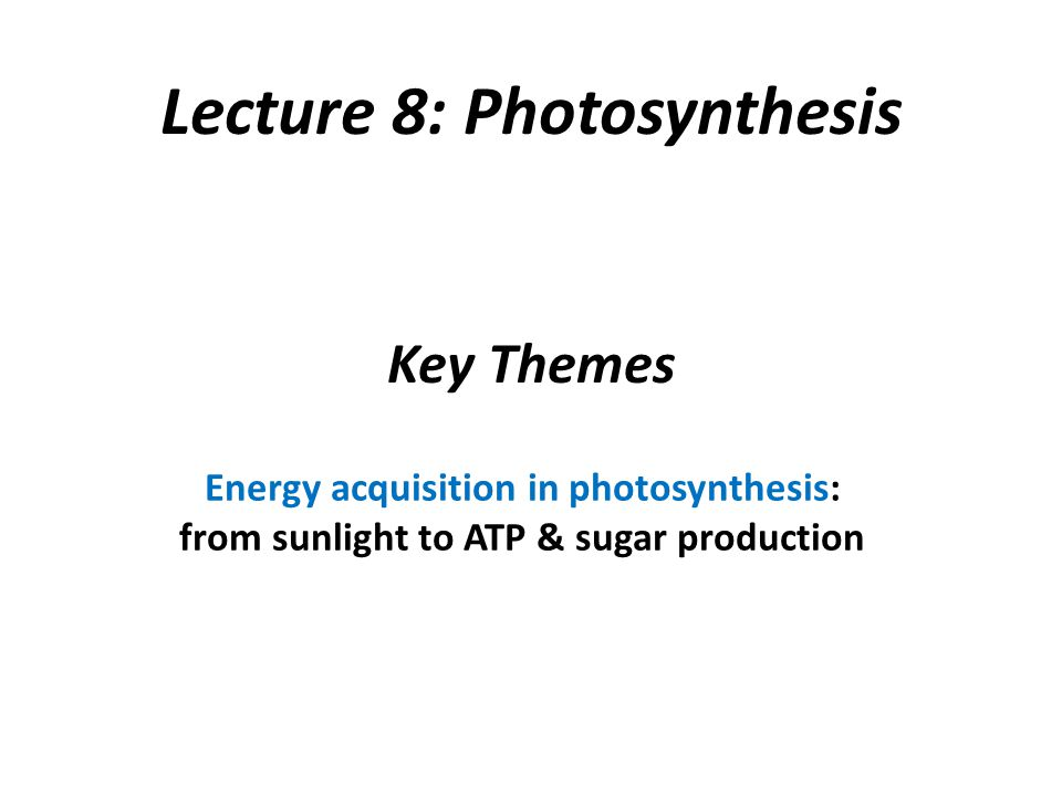 Key Themes Energy acquisition in photosynthesis: from sunlight to ATP & sugar production Lecture 8: Photosynthesis