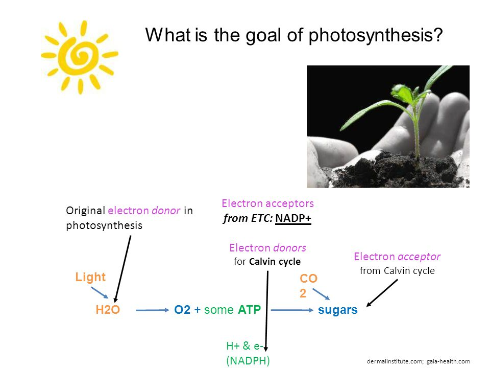 What is the goal of photosynthesis? O2 + some ATPsugarsH2O H+ & e- (NADPH) CO 2 Light dermalinstitute.com; gaia-health.com Original electron donor in