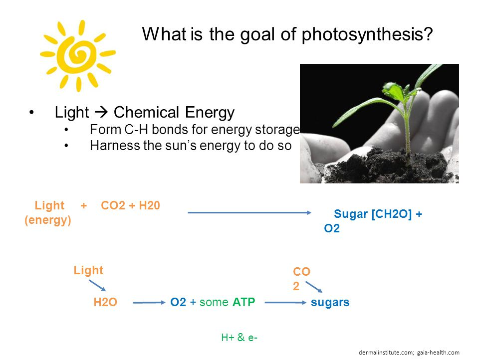 What is the goal of photosynthesis.