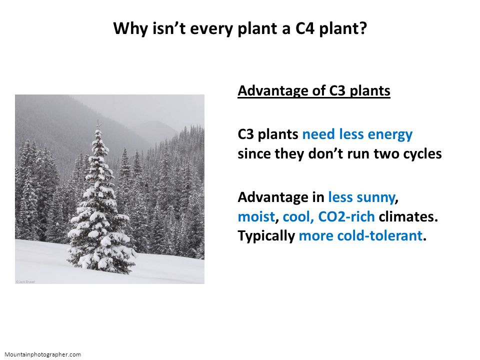 Why isn't every plant a C4 plant.
