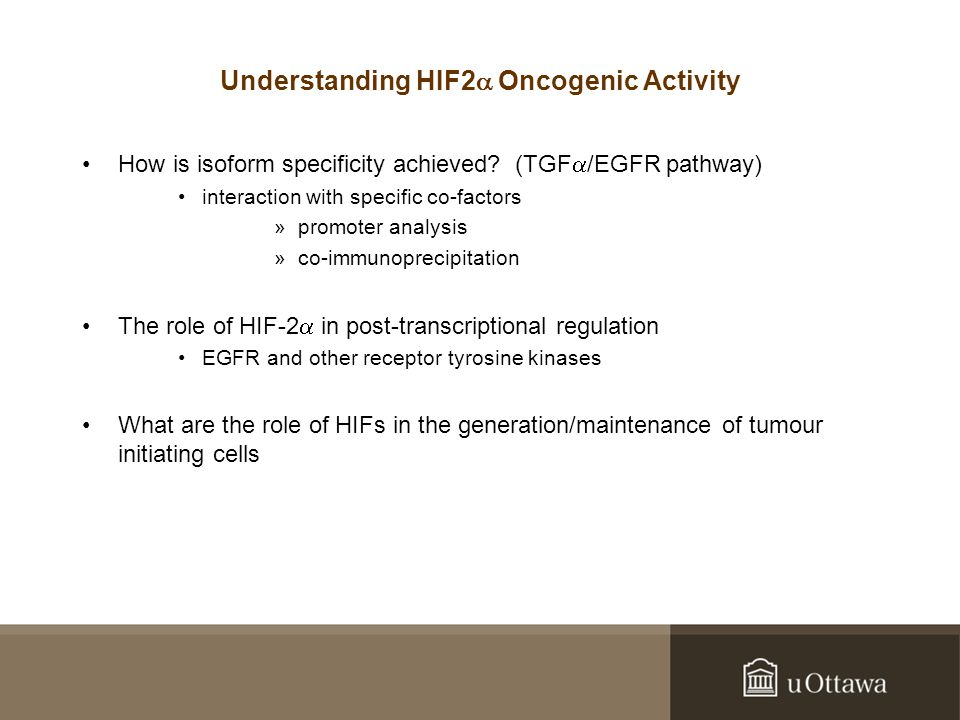 Understanding HIF2  Oncogenic Activity How is isoform specificity achieved.