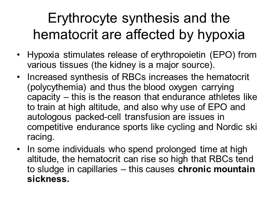 Erythrocyte synthesis and the hematocrit are affected by hypoxia Hypoxia stimulates release of erythropoietin (EPO) from various tissues (the kidney is a major source).