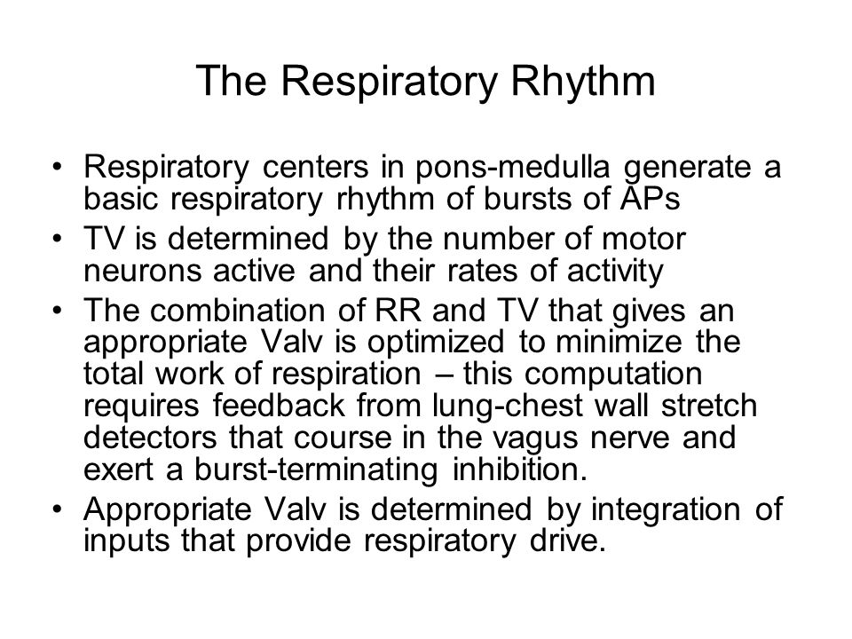 The Respiratory Rhythm Respiratory centers in pons-medulla generate a basic respiratory rhythm of bursts of APs TV is determined by the number of motor neurons active and their rates of activity The combination of RR and TV that gives an appropriate Valv is optimized to minimize the total work of respiration – this computation requires feedback from lung-chest wall stretch detectors that course in the vagus nerve and exert a burst-terminating inhibition.