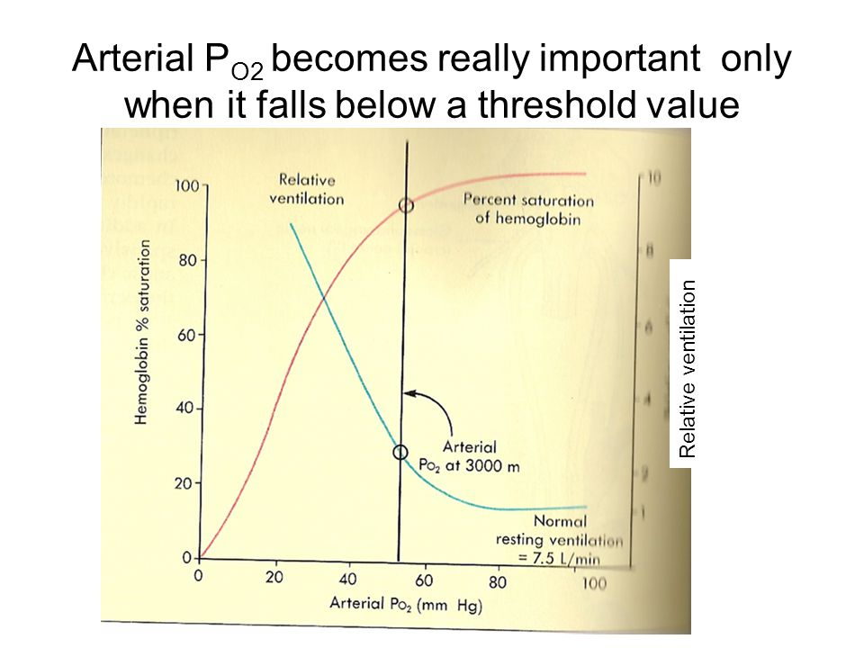 Arterial P O2 becomes really important only when it falls below a threshold value Relative ventilation