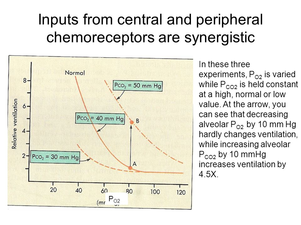 Inputs from central and peripheral chemoreceptors are synergistic P O2 In these three experiments, P O2 is varied while P CO2 is held constant at a high, normal or low value.