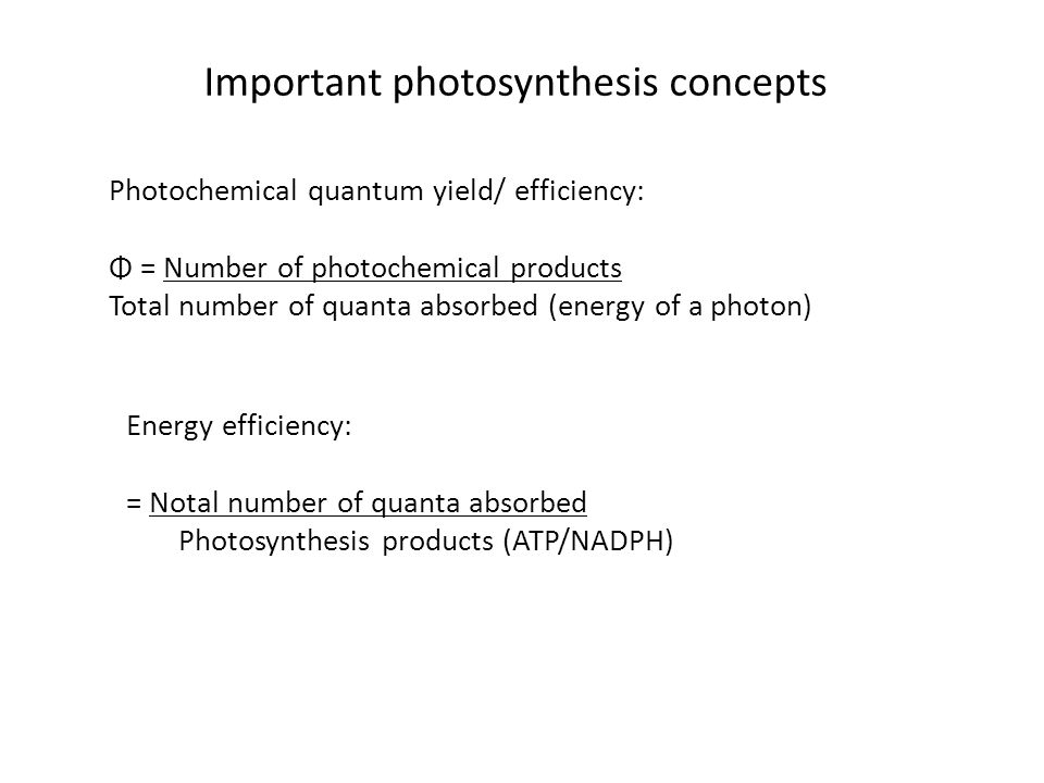 Photochemical quantum yield/ efficiency: Φ = Number of photochemical products Total number of quanta absorbed (energy of a photon) Energy efficiency: = Notal number of quanta absorbed Photosynthesis products (ATP/NADPH) Important photosynthesis concepts