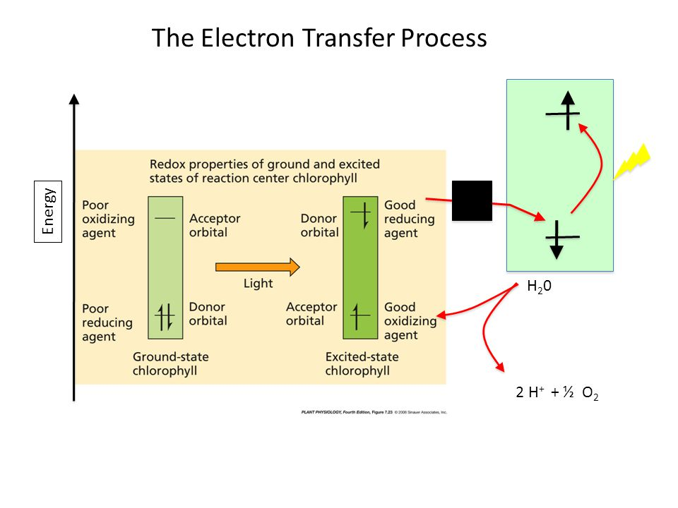 Energy H20H20 2 H + + ½ O 2 The Electron Transfer Process