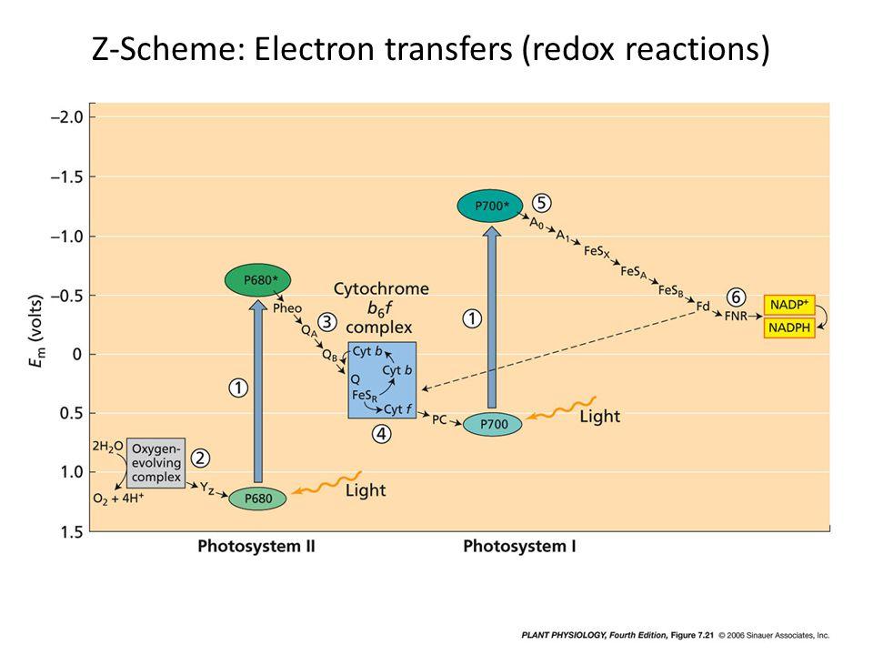 Z-Scheme: Electron transfers (redox reactions)
