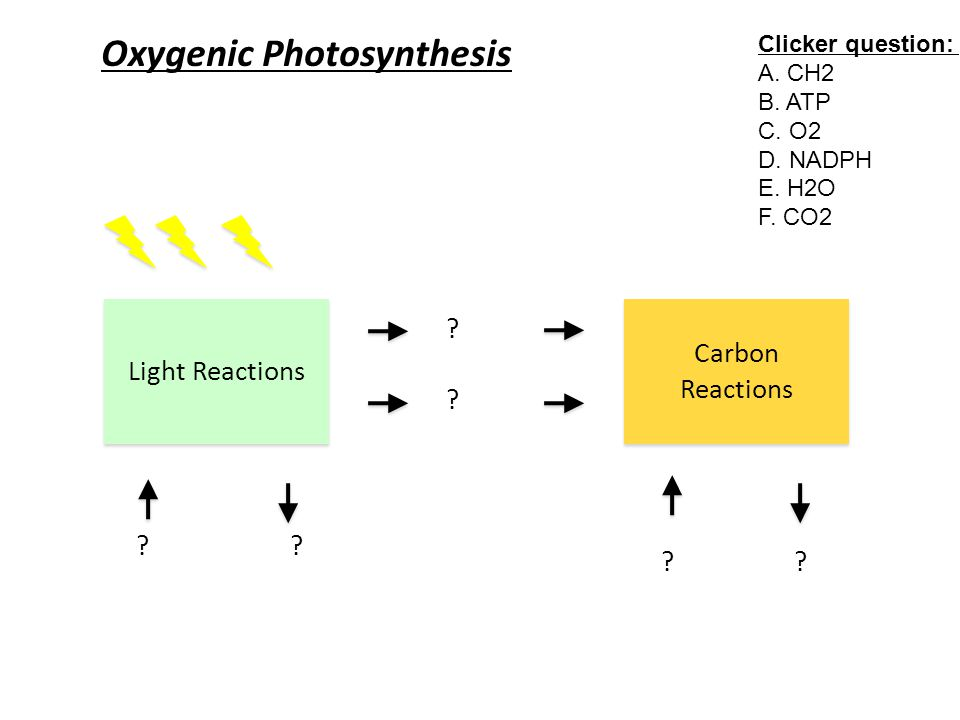 Oxygenic Photosynthesis Light Reactions ???.Carbon Reactions .