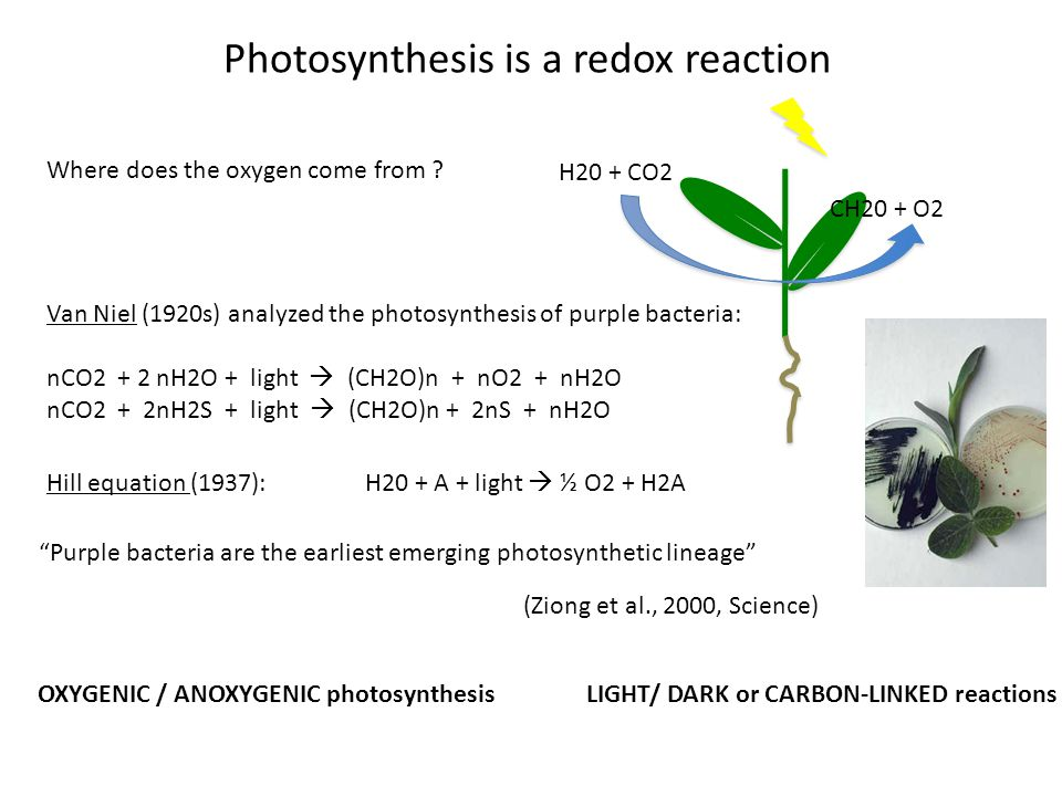 Where does the oxygen come from .