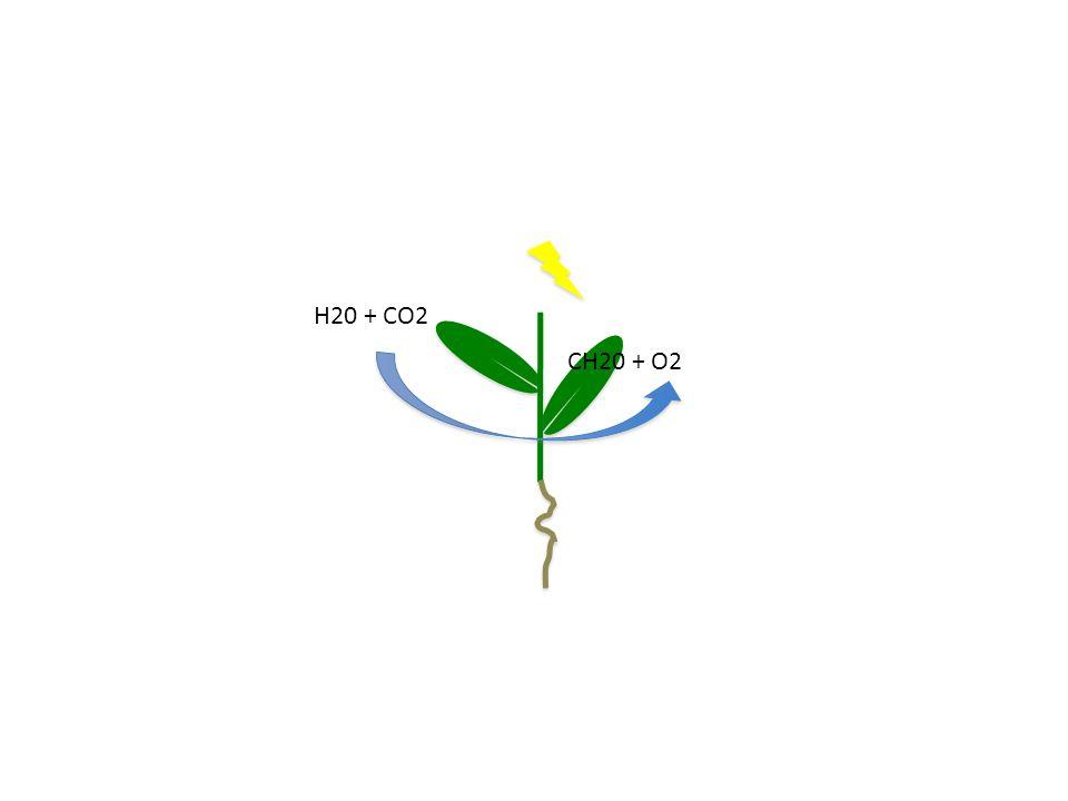 H20 + CO2 CH20 + O2