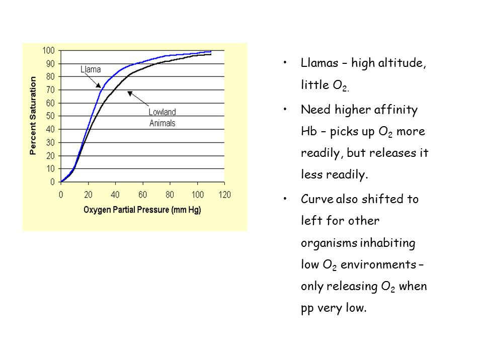 Llamas – high altitude, little O 2. Need higher affinity Hb – picks up O 2 more readily, but releases it less readily. Curve also shifted to left for