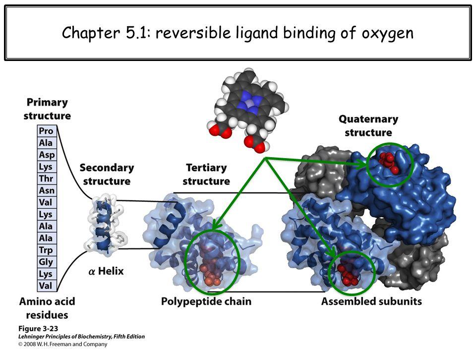 T vs. R hemoglobin Oxygen reservoir Oxygen reservoir