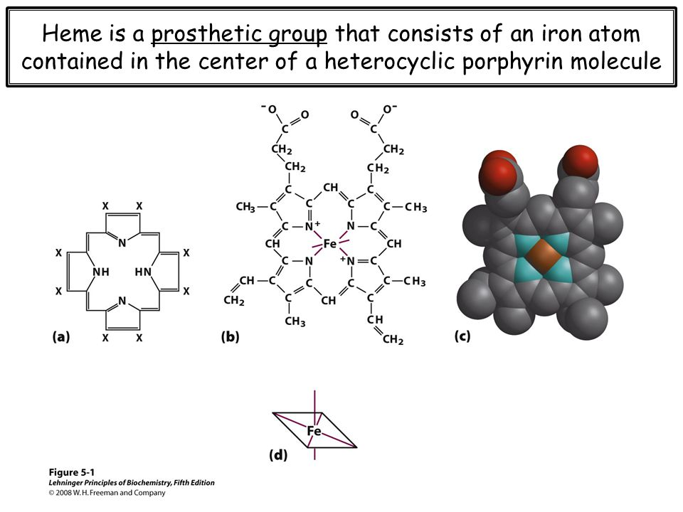 Heme serves as a scaffolding for iron, which binds oxygen