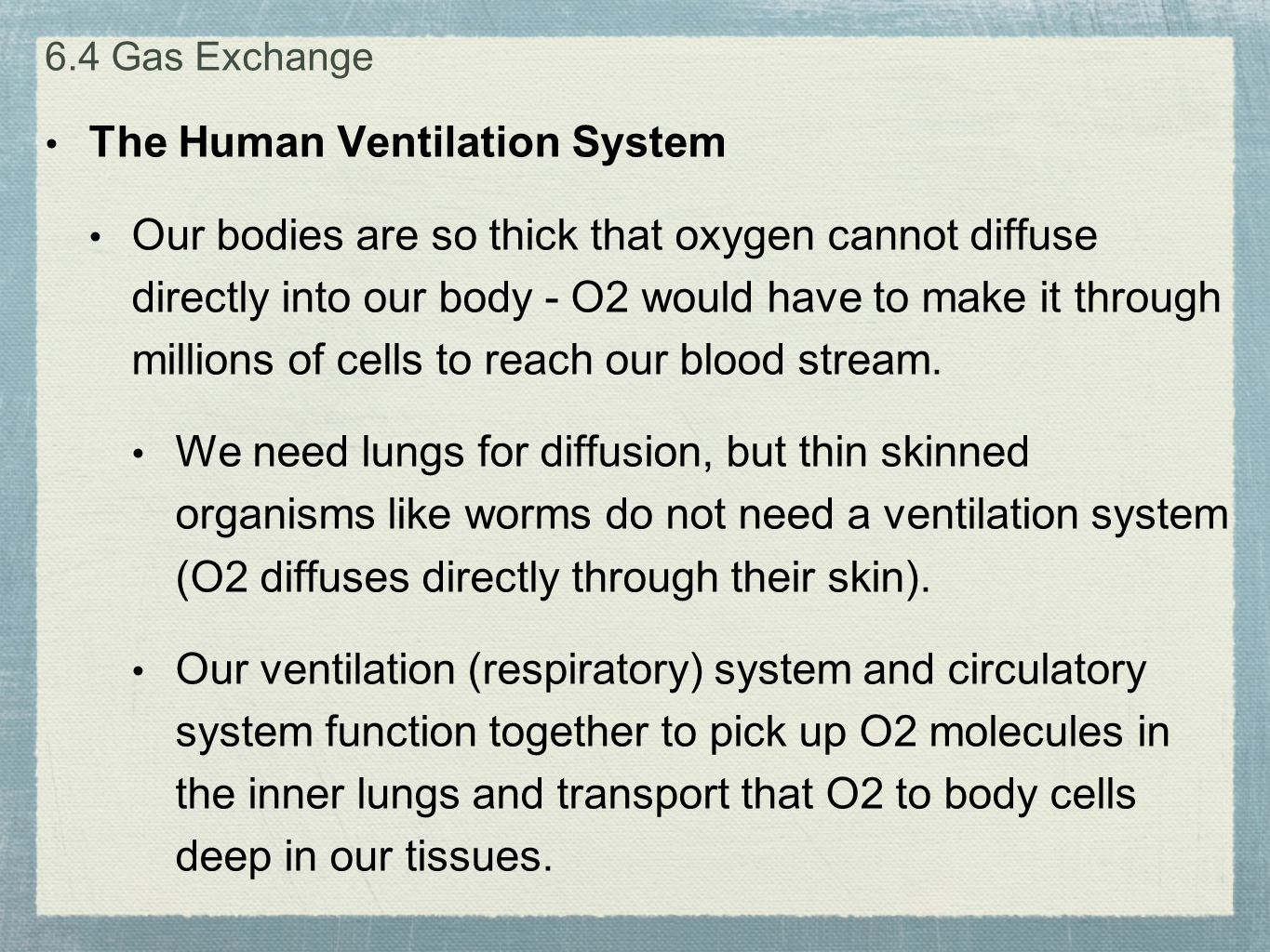 The Human Ventilation System Our bodies are so thick that oxygen cannot diffuse directly into our body - O2 would have to make it through millions of