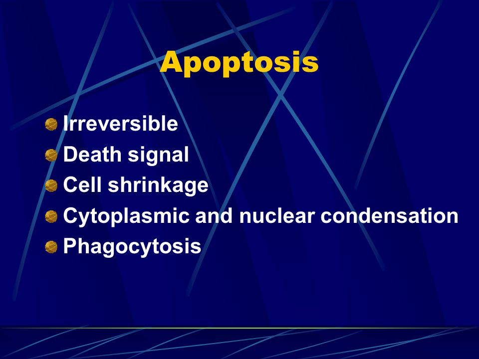 Apoptosis Irreversible Death signal Cell shrinkage Cytoplasmic and nuclear condensation Phagocytosis