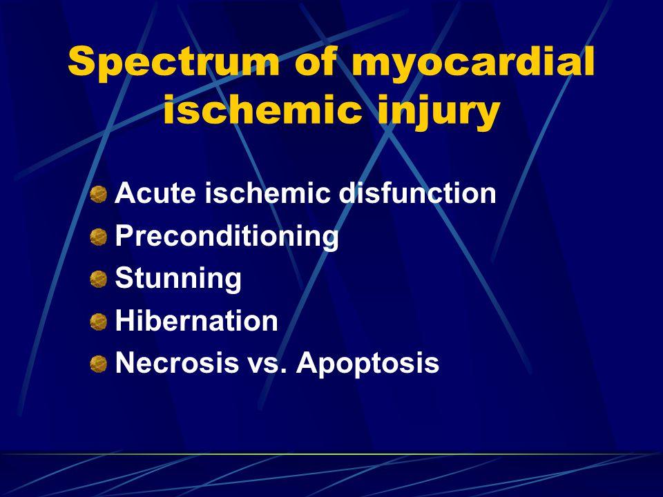 Spectrum of myocardial ischemic injury Acute ischemic disfunction Preconditioning Stunning Hibernation Necrosis vs.