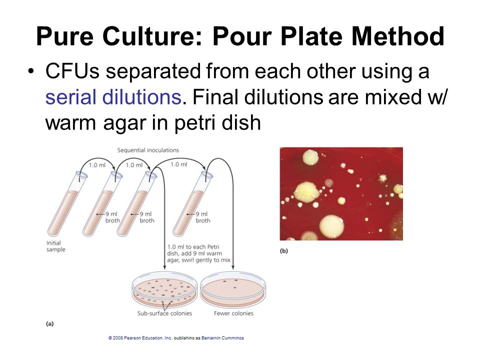 Pure Culture: Pour Plate Method CFUs separated from each other using a serial dilutions.