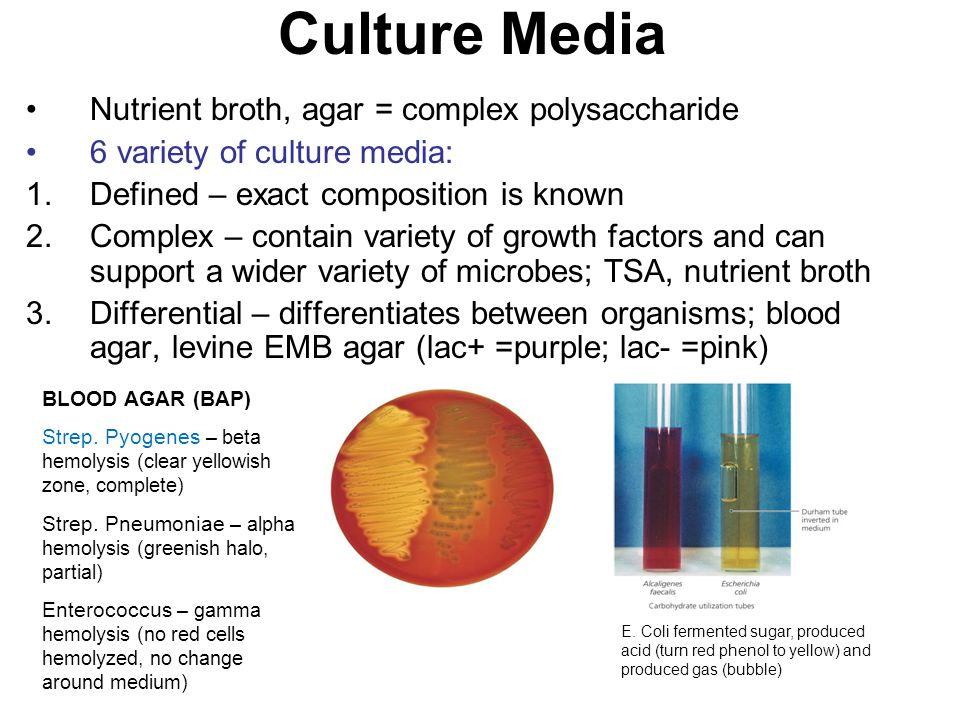 Culture Media Nutrient broth, agar = complex polysaccharide 6 variety of culture media: 1.Defined – exact composition is known 2.Complex – contain variety of growth factors and can support a wider variety of microbes; TSA, nutrient broth 3.Differential – differentiates between organisms; blood agar, levine EMB agar (lac+ =purple; lac- =pink) BLOOD AGAR (BAP) Strep.