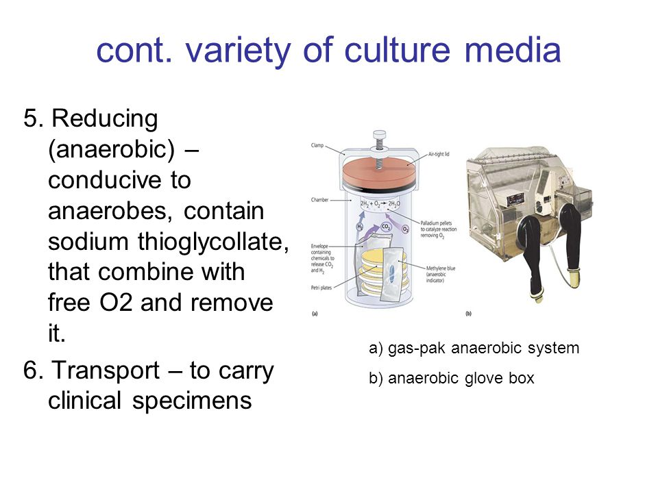 cont. variety of culture media 5.
