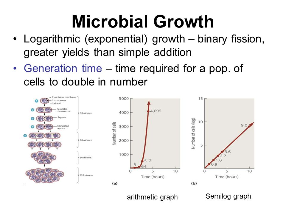 Microbial Growth Logarithmic (exponential) growth – binary fission, greater yields than simple addition Generation time – time required for a pop. of
