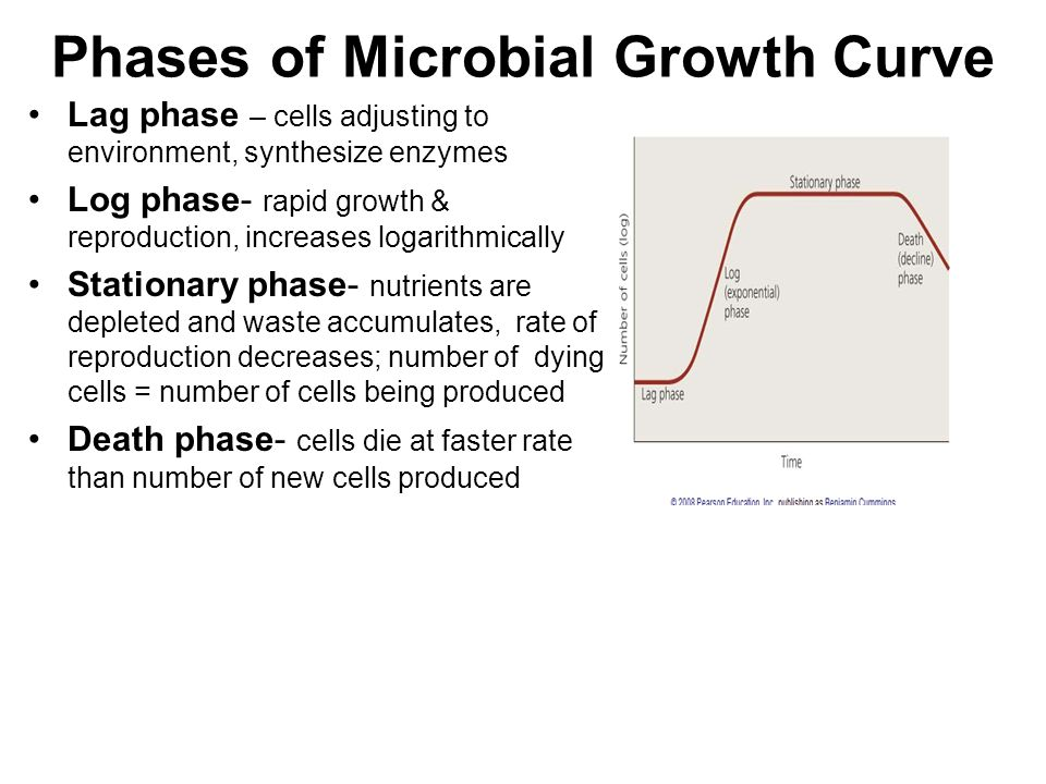 Phases of Microbial Growth Curve Lag phase – cells adjusting to environment, synthesize enzymes Log phase- rapid growth & reproduction, increases logarithmically Stationary phase- nutrients are depleted and waste accumulates, rate of reproduction decreases; number of dying cells = number of cells being produced Death phase- cells die at faster rate than number of new cells produced