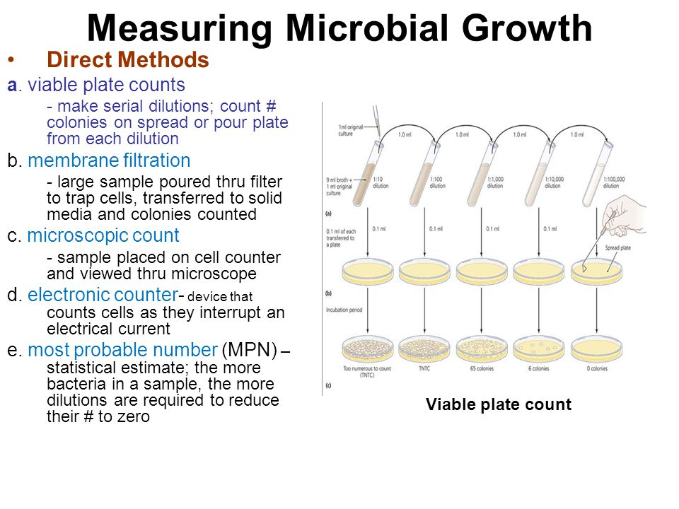 Measuring Microbial Growth Direct Methods a. viable plate counts - make serial dilutions; count # colonies on spread or pour plate from each dilution