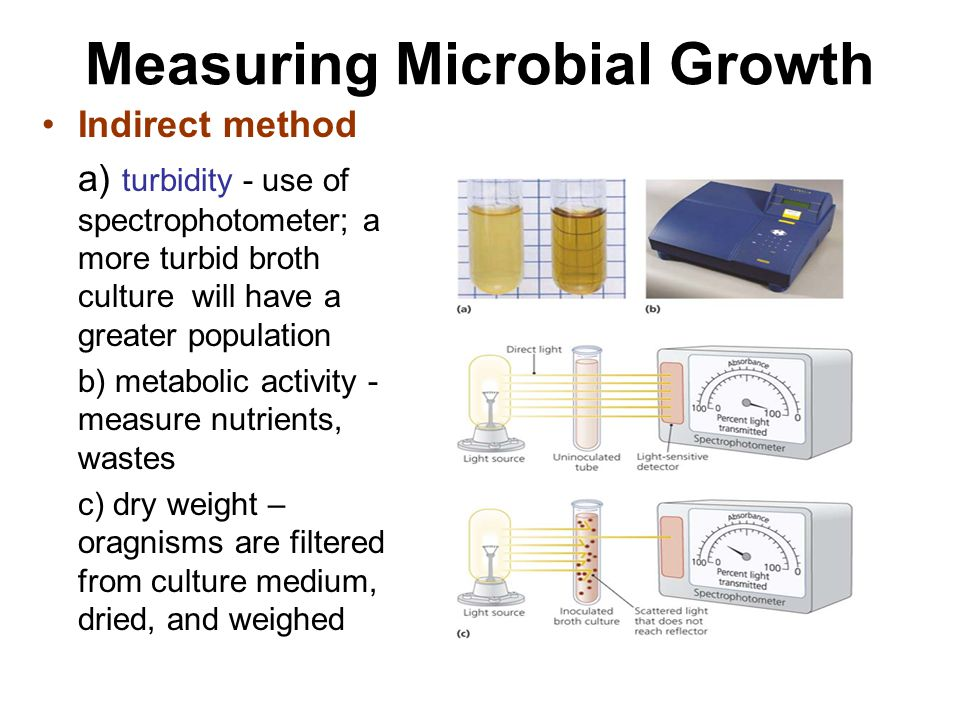 Measuring Microbial Growth Indirect method a) turbidity - use of spectrophotometer; a more turbid broth culture will have a greater population b) metabolic activity - measure nutrients, wastes c) dry weight – oragnisms are filtered from culture medium, dried, and weighed