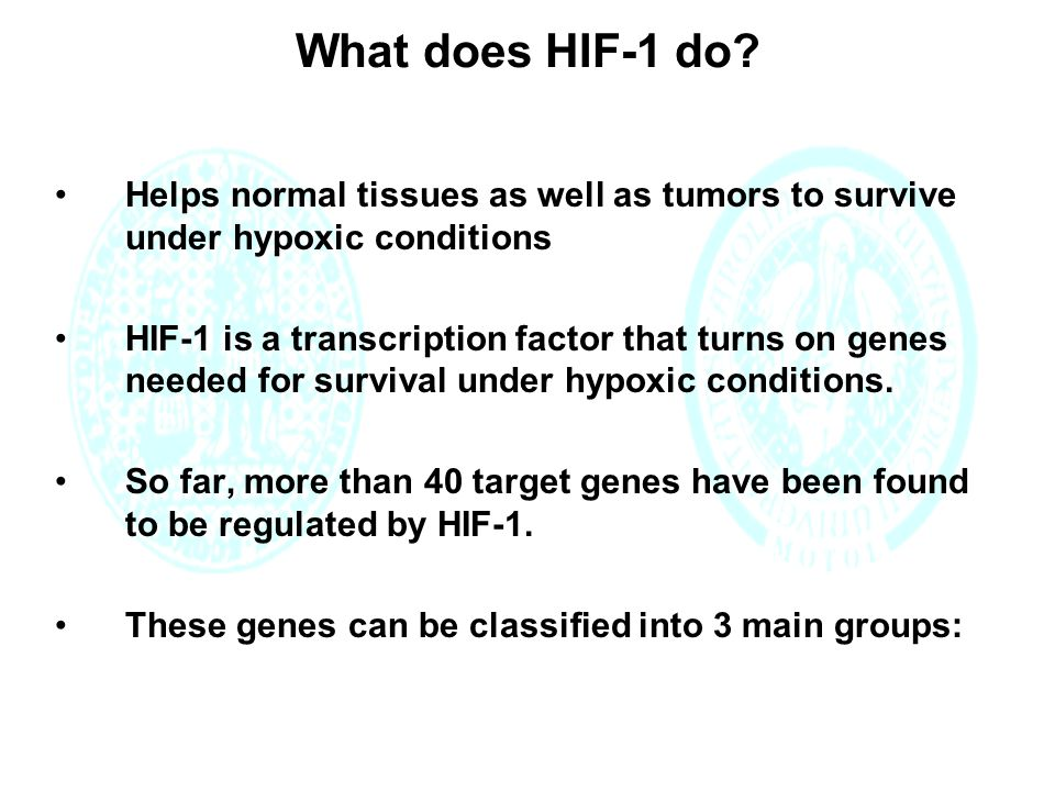 What does HIF-1 do.