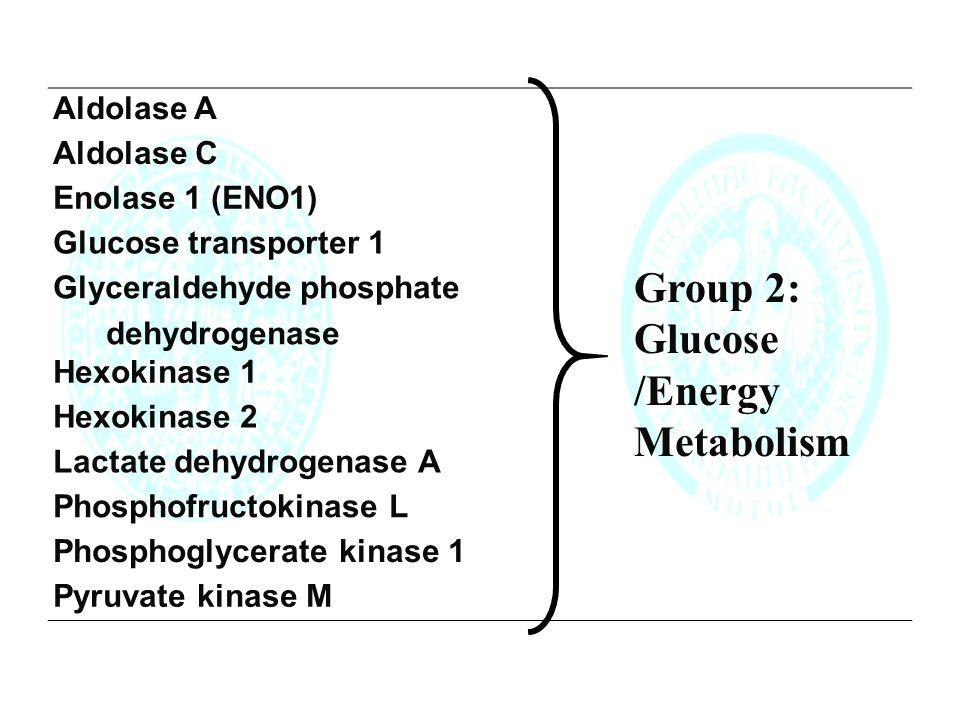 Aldolase A Aldolase C Enolase 1 (ENO1) Glucose transporter 1 Glyceraldehyde phosphate dehydrogenase Hexokinase 1 Hexokinase 2 Lactate dehydrogenase A Phosphofructokinase L Phosphoglycerate kinase 1 Pyruvate kinase M Group 2: Glucose /Energy Metabolism