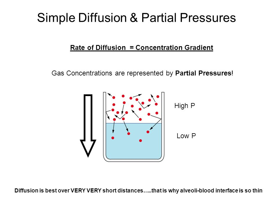 Simple Diffusion & Partial Pressures Rate of Diffusion = Concentration Gradient Gas Concentrations are represented by Partial Pressures.