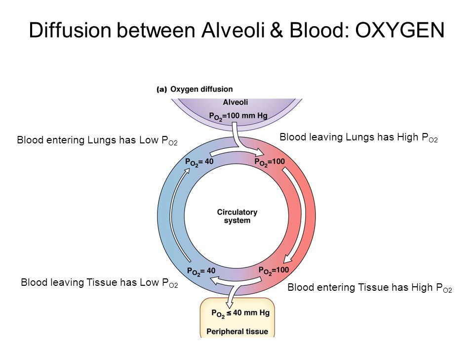 Diffusion between Alveoli & Blood: OXYGEN Blood entering Lungs has Low P O2 Blood leaving Lungs has High P O2 Blood entering Tissue has High P O2 Blood leaving Tissue has Low P O2
