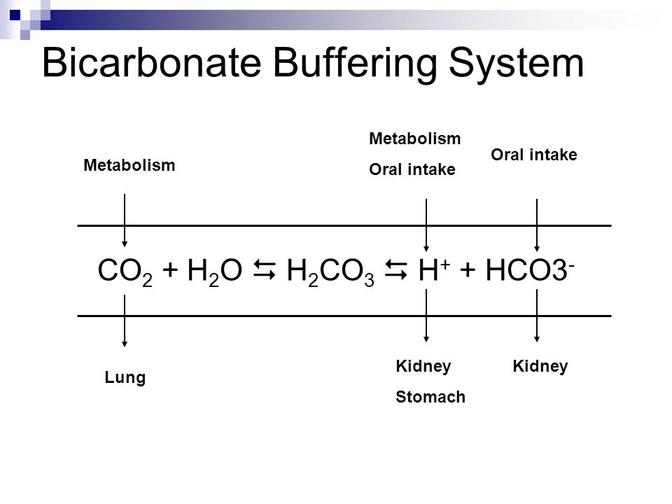 Bicarbonate Buffering System CO 2 + H 2 O  H 2 CO 3  H + + HCO3 - Oral intake Kidney Metabolism Oral intake Kidney Stomach Metabolism Lung