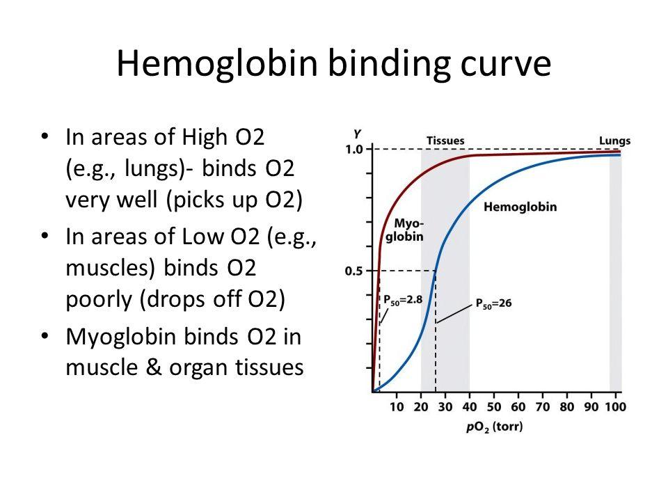 Hemoglobin binding curve In areas of High O2 (e.g., lungs)- binds O2 very well (picks up O2) In areas of Low O2 (e.g., muscles) binds O2 poorly (drops off O2) Myoglobin binds O2 in muscle & organ tissues