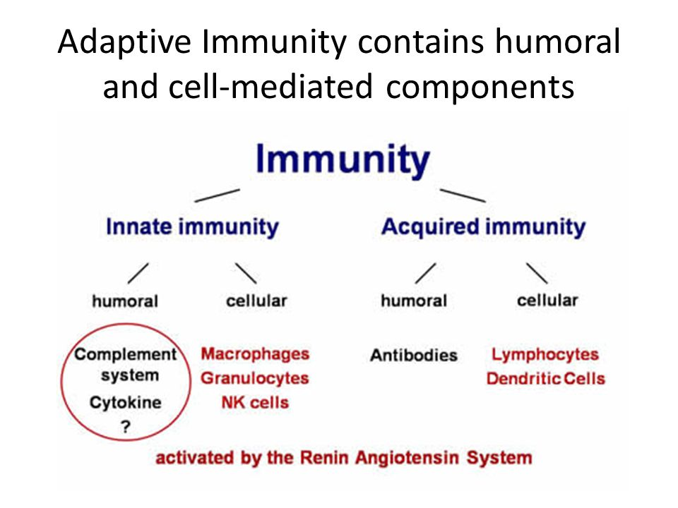Adaptive Immunity contains humoral and cell-mediated components
