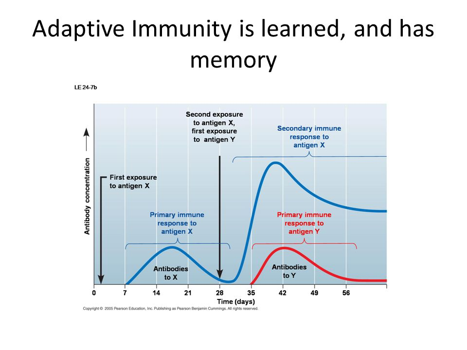 Adaptive Immunity is learned, and has memory