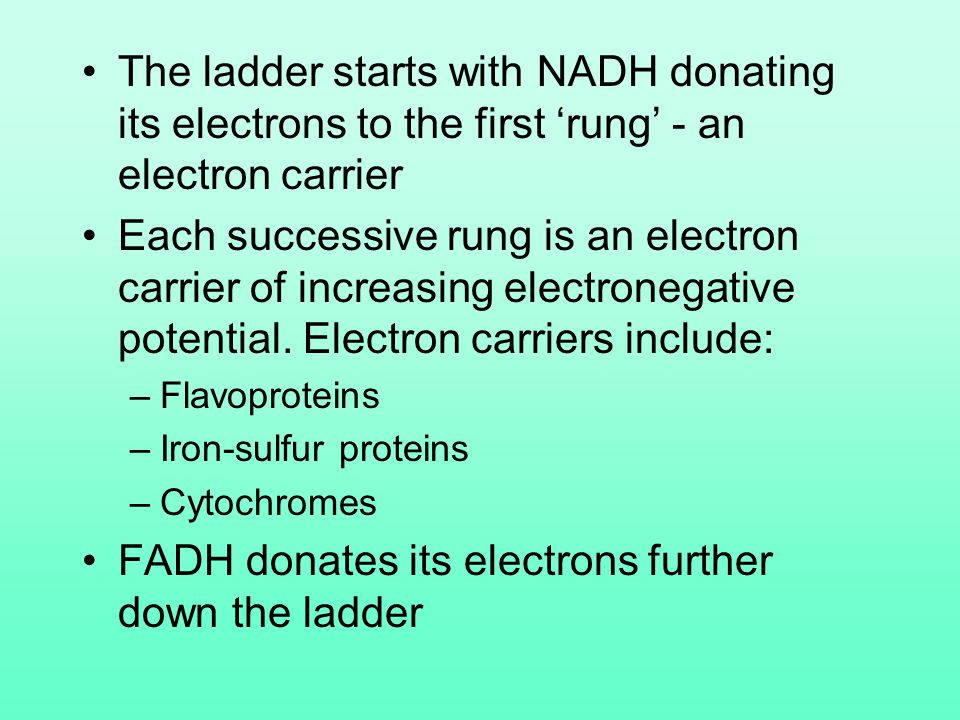 The ladder starts with NADH donating its electrons to the first 'rung' - an electron carrier Each successive rung is an electron carrier of increasing
