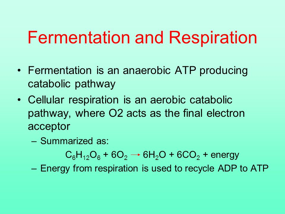 Fermentation and Respiration Fermentation is an anaerobic ATP producing catabolic pathway Cellular respiration is an aerobic catabolic pathway, where O2 acts as the final electron acceptor –Summarized as: C 6 H 12 O 6 + 6O 2 6H 2 O + 6CO 2 + energy –Energy from respiration is used to recycle ADP to ATP