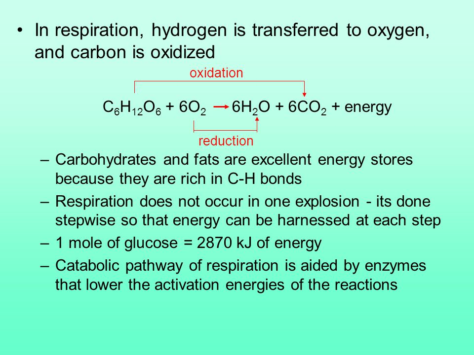 In respiration, hydrogen is transferred to oxygen, and carbon is oxidized C 6 H 12 O 6 + 6O 2 6H 2 O + 6CO 2 + energy –Carbohydrates and fats are excellent energy stores because they are rich in C-H bonds –Respiration does not occur in one explosion - its done stepwise so that energy can be harnessed at each step –1 mole of glucose = 2870 kJ of energy –Catabolic pathway of respiration is aided by enzymes that lower the activation energies of the reactions oxidation reduction