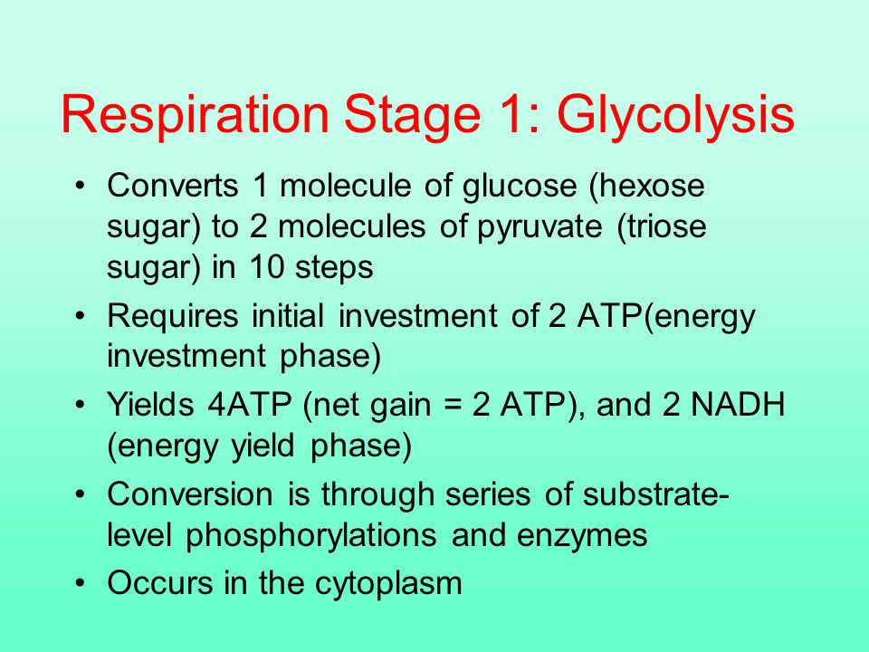Respiration Stage 1: Glycolysis Converts 1 molecule of glucose (hexose sugar) to 2 molecules of pyruvate (triose sugar) in 10 steps Requires initial investment of 2 ATP(energy investment phase) Yields 4ATP (net gain = 2 ATP), and 2 NADH (energy yield phase) Conversion is through series of substrate- level phosphorylations and enzymes Occurs in the cytoplasm